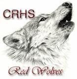 cedar ridge red wolf smaller