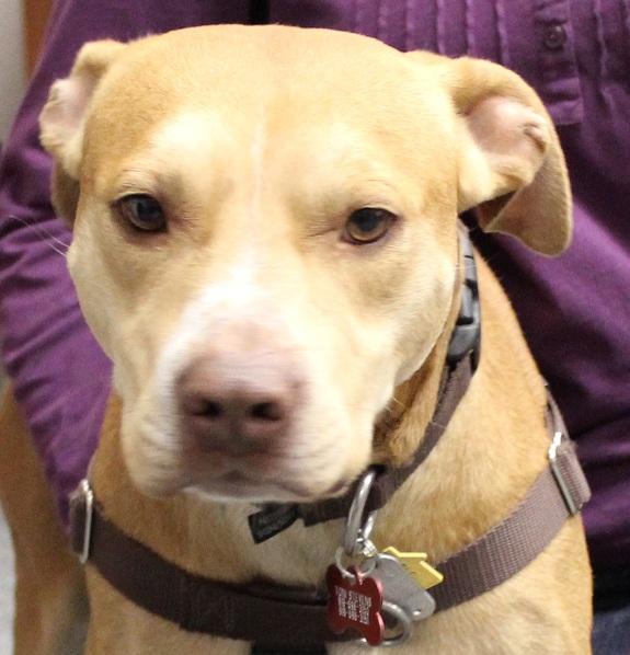 Adopt Ernie: An Oversized Lapdog