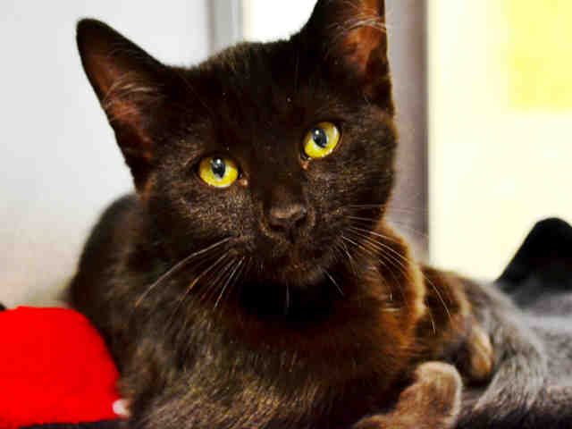 Adopt Sky: An Affectionate Kitten