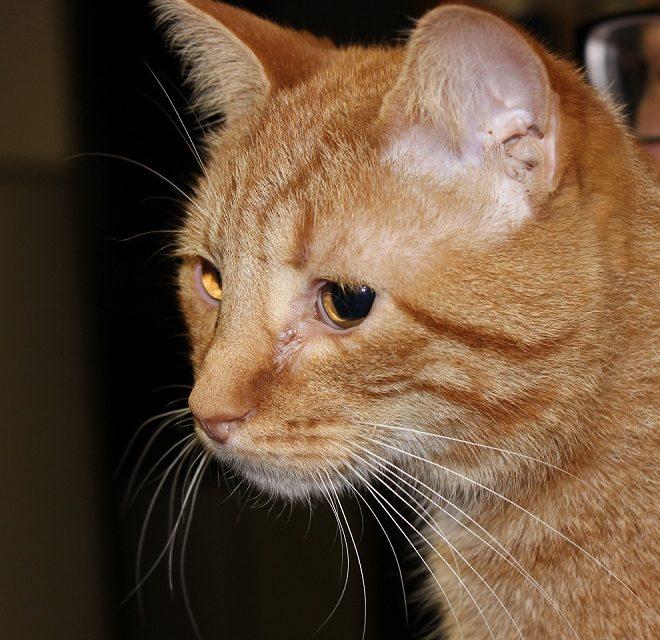 Adopt Firefox And Bettie: High-Energy Kittens