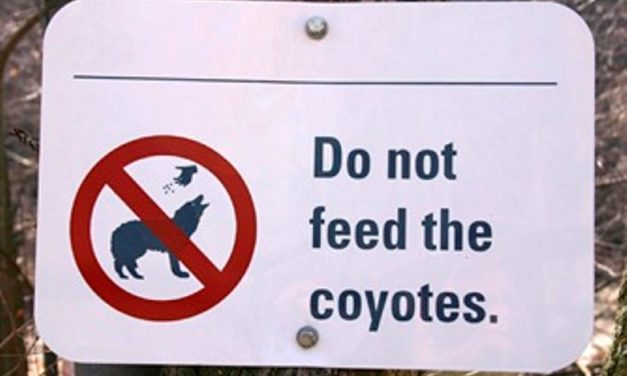 Orange County Animal Services Advise Coyote Safety