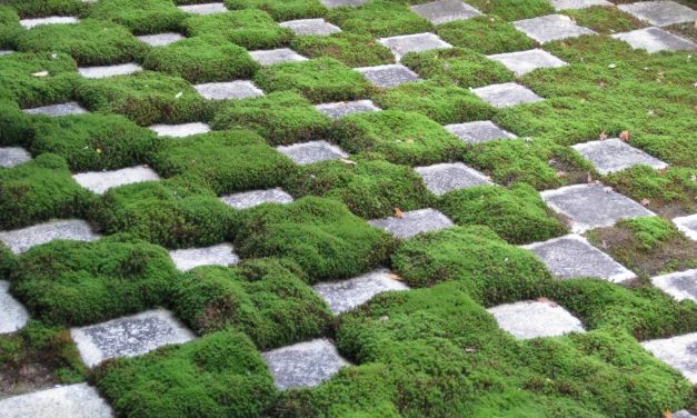 The Beauty Of Moss Gardening