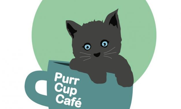 Raleigh Couple to Open Cat Cafe