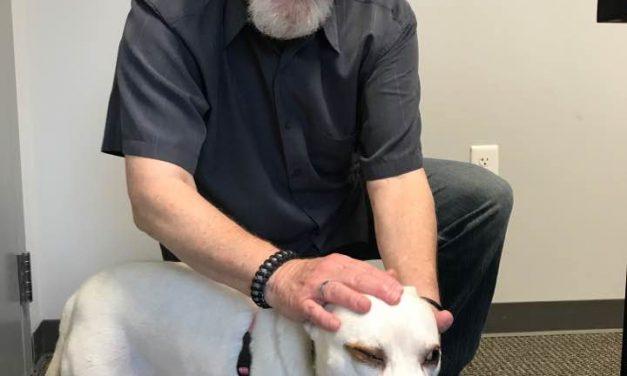 Adopt-a-Pet: Wilma