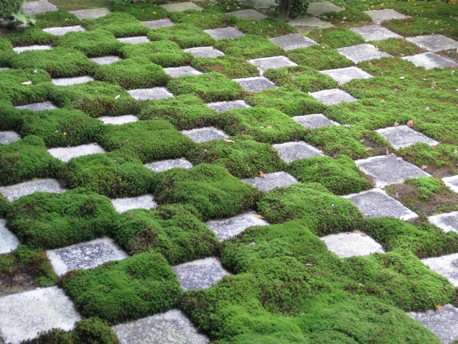 Image result for moss garden
