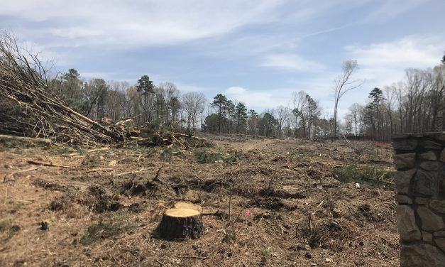 Viewpoints: What's Happening to Chapel Hill's Trees?