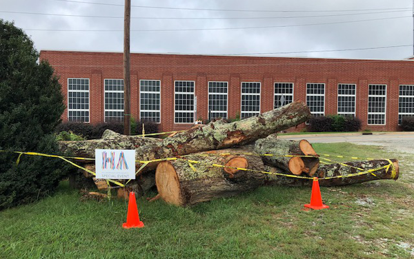 Hillsborough Donating Wood from 'Town Treasure' Tree Downed During Hurricane Florence