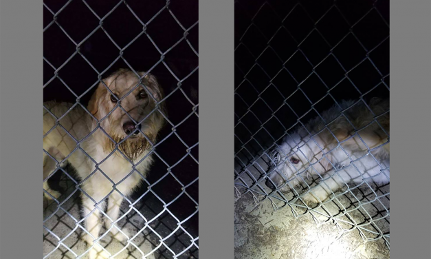 Hillsborough Police Find 2 Dogs Abandoned in Park During Cold Temperatures