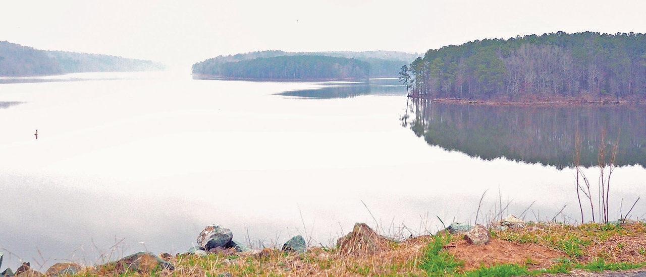 Jordan Lake's Bald Eagles Seek Sanctuary