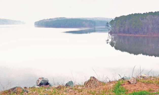 Jordan Lake's Bald Eagles Seek Sanctuary
