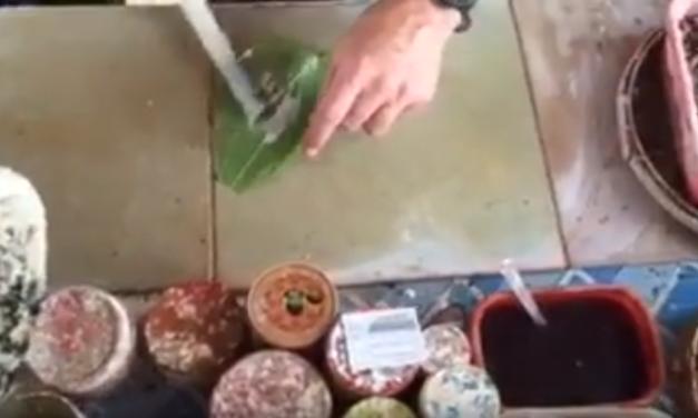 UNC Professor & Video Journalist Jim Kitchen Makes Betel Nut Chew in Central Myanmar