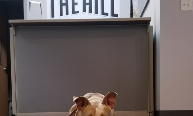 Adopt-A-Pet: Pearl from Yadid'it! Sustainable Dog Rescue