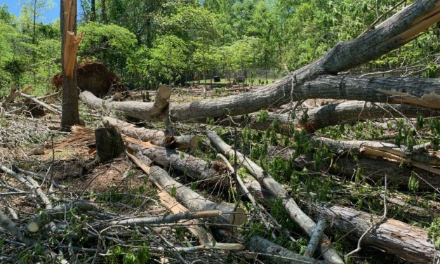 Orange County Tornado: 'All the Trees are Gone'