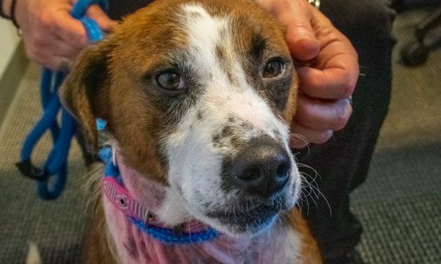 Adopt-A-Pet: NAAN from Orange County Animal Services
