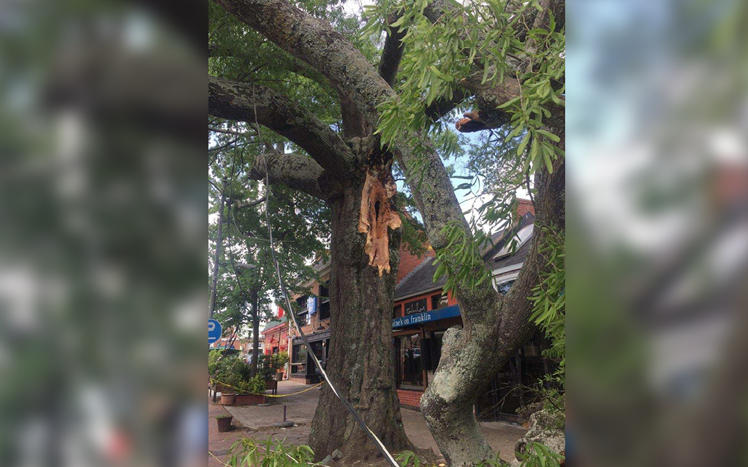 1 Injured as Tree Falls in Downtown Chapel Hill
