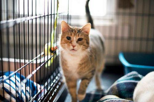 Adopt-A-Pet: Lovey