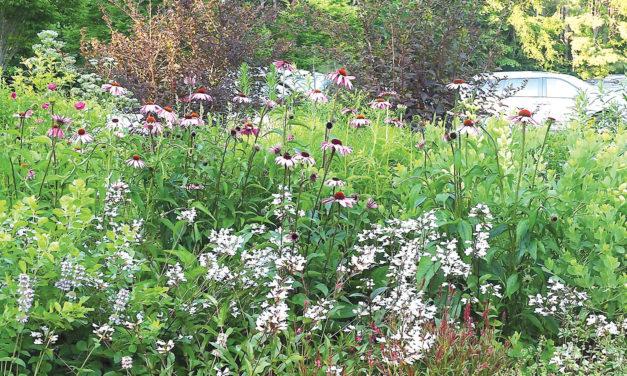 Pollinator Garden in Pittsboro Feeds Bees, Local Economy