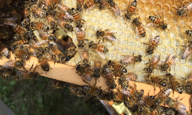 Made in NC: Just Bee Apiary