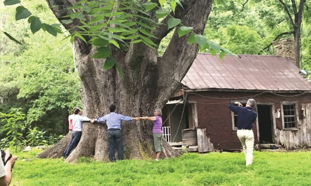 Organization Shines Spotlight on Chatham's Grand Trees