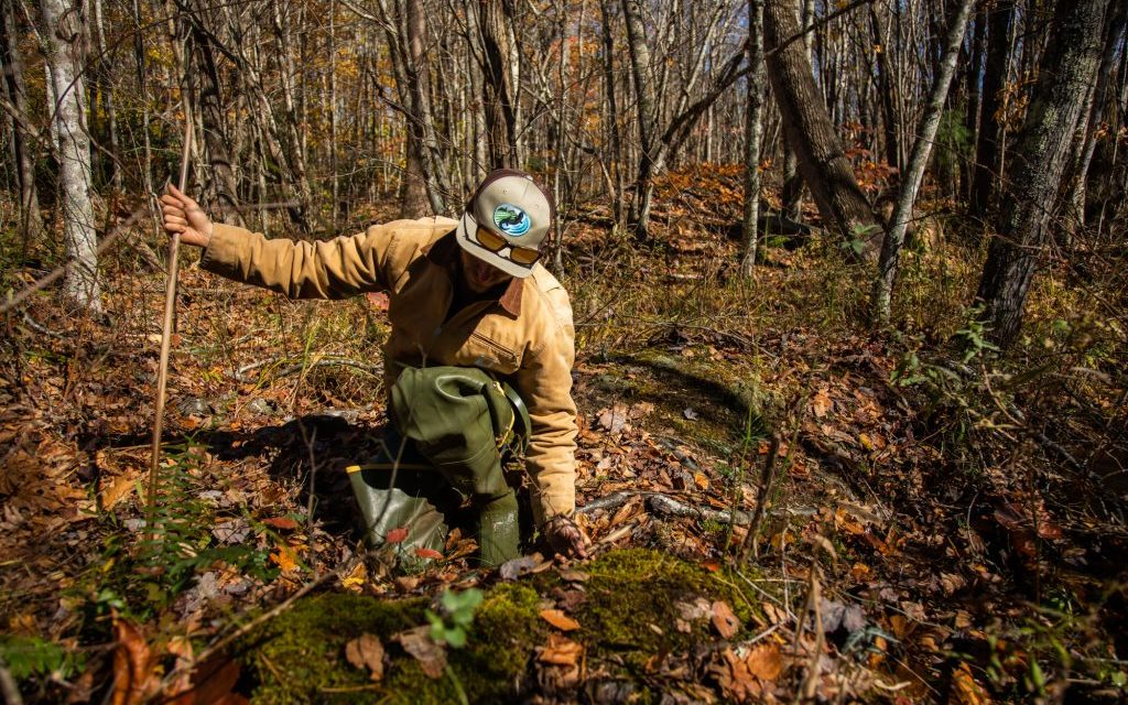 The Quest to Protect the Bog Turtle: Saving NC's Smallest Turtle