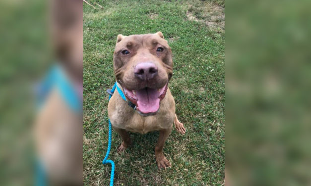 Adopt-A-Pet: M.C. Hammer from Orange County Animal Services