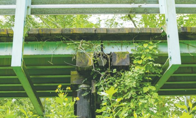 Recalling the Preservation of an Historic Bridge in Chatham County