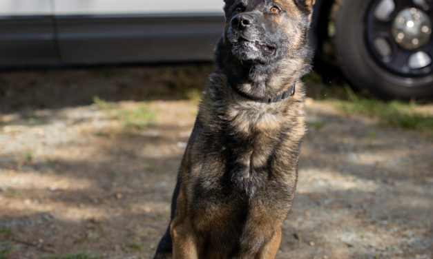 Chapel Hill K-9 Officer 'Ace' Retires After 4 Years