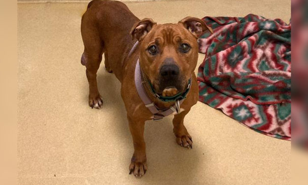 Adopt-A-Pet: Gerald from Orange County Animal Services
