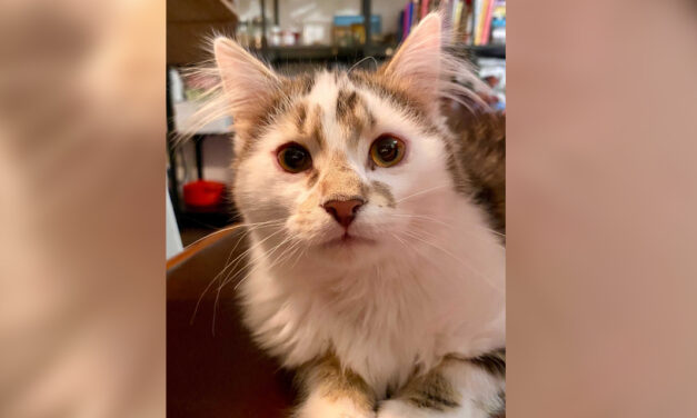 Adopt-A-Pet: Lucky and Bernie from Independent Animal Rescue