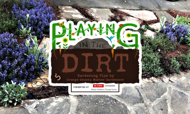 Playing in the Dirt: Growing Herbs for a Beautiful and Flavorful Garden