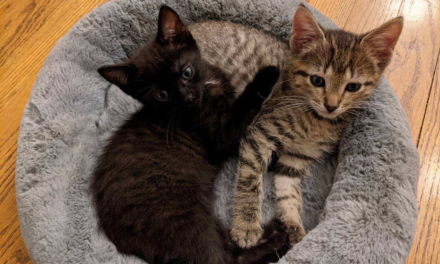 Adopt-A-Pet: Rook and Raven from Independent Animal Rescue