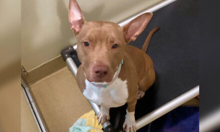 Adopt-A-Pet: Princess from Orange County Animal Services