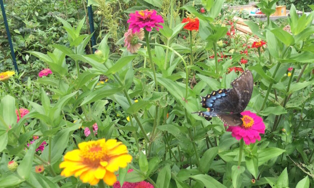 Playing in the Dirt: Six Simple-to-Grow, Heat-Loving Summer Flowers
