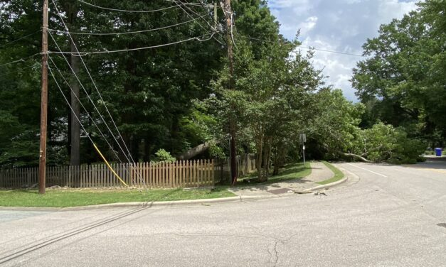 Downed Tree on N. Greensboro Street Leaves Hundreds Without Power