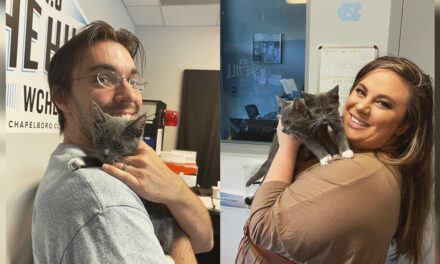 Adopt-A-Pets: Rachel, Ross, Monica and Chandler from Independent Animal Rescue