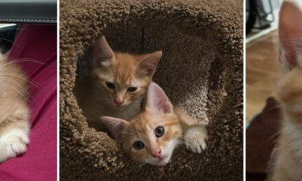 Adopt-A-Pets: Fred and George