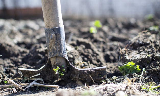 Playing In The Dirt: It's All About The Soil